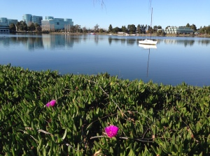 Sunshine in Redwood Shores